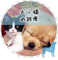 犬・猫の診療
