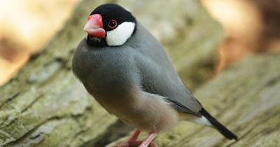 鳥類についてのお勉強