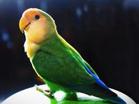 小鳥の問題行動