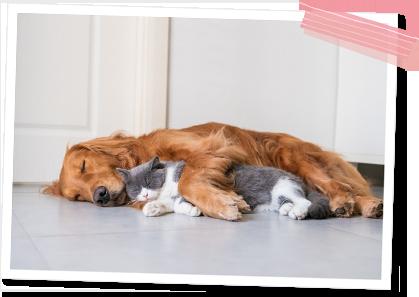 犬・猫の診療について