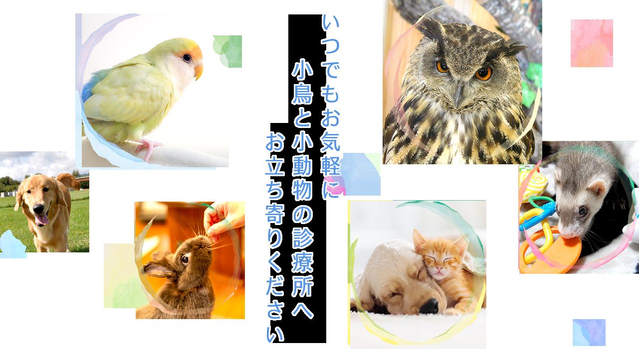 いつでもお気軽に小鳥と小動物の診療所へお立ち寄りください